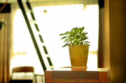 小巧玲瓏米色客廳植物構造圖
