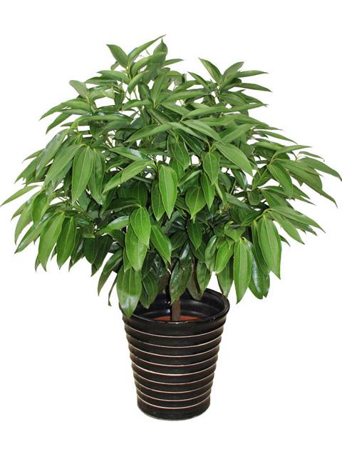 适合室内养的植物