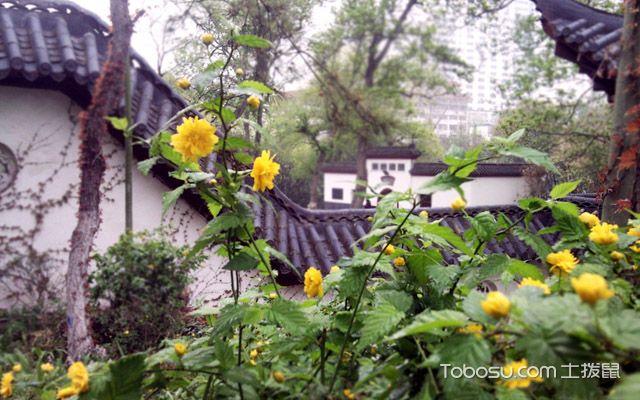 院子种花风水