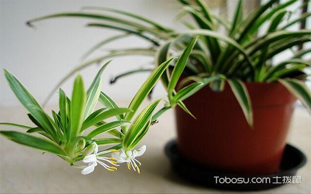 室内植物布置