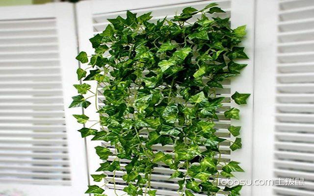 客厅风水植物有哪些