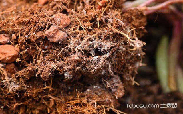 多肉植物长虫