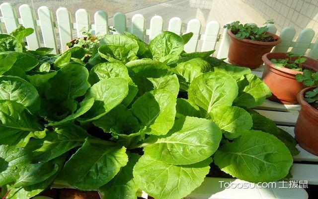 阳台种菜装置