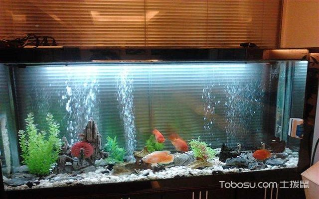 一进门看见鱼缸好吗