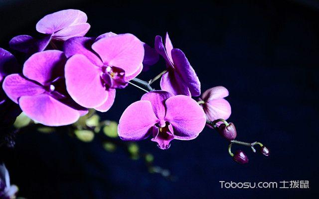 蝴蝶兰如何水培之什么是蝴蝶兰