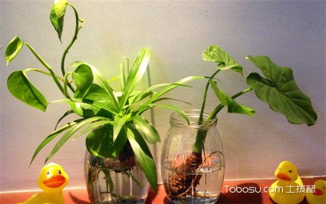卧室绿色植物风水-不能有枯叶