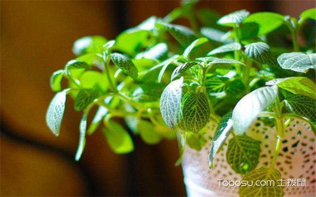 卧室绿色植物风水-向阳摆放