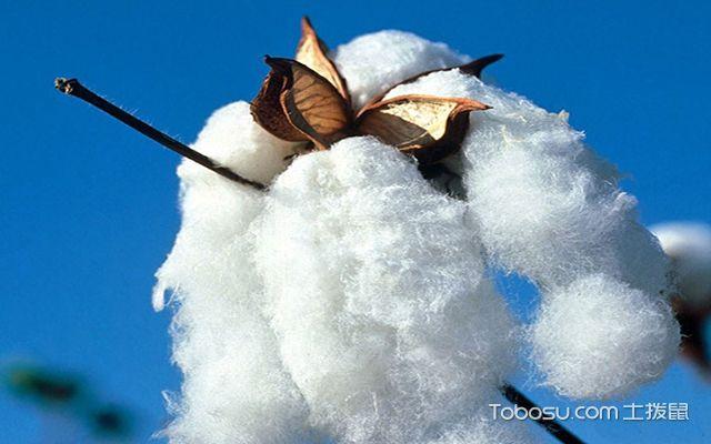 纯棉被套怎么辨别,附带纯棉被套鉴别方法