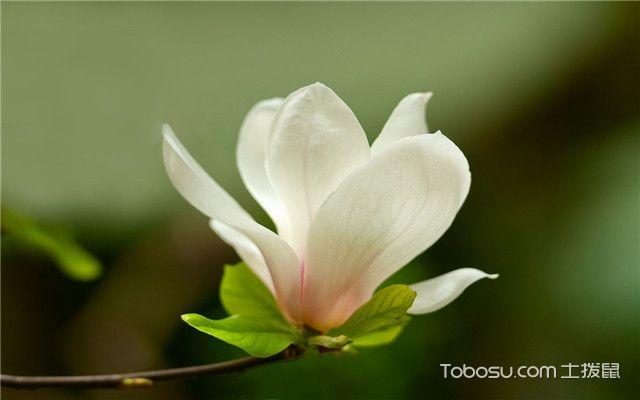 春季开花的植物有哪些