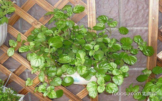 什么植物除甲醛最好