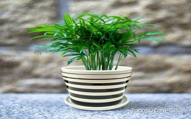 使用什么植物除甲醛最好