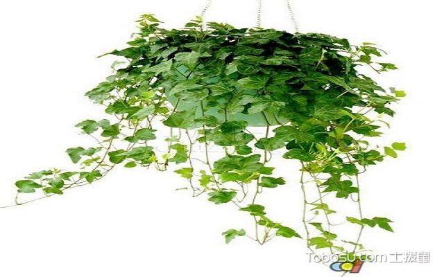 家中什么植物除甲醛最好