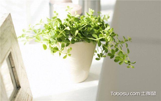 客厅植物摆放风水的原则有哪些正东边