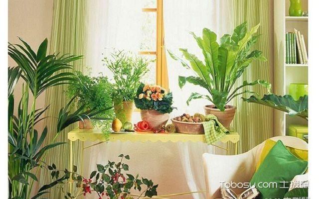 客厅植物摆放风水的原则有哪些门口