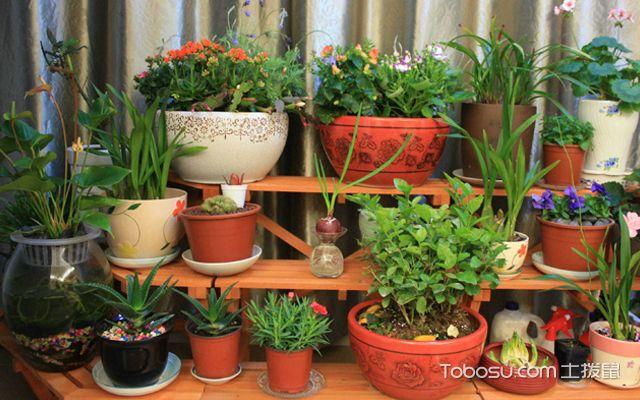 阳台花架设计花卉养殖
