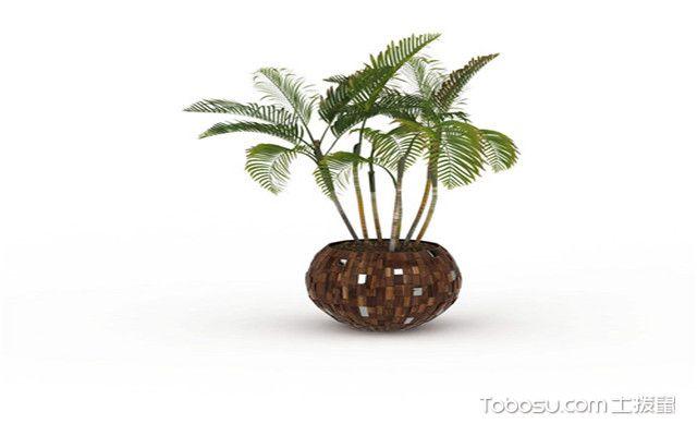 袖珍椰子可以放卧室吗