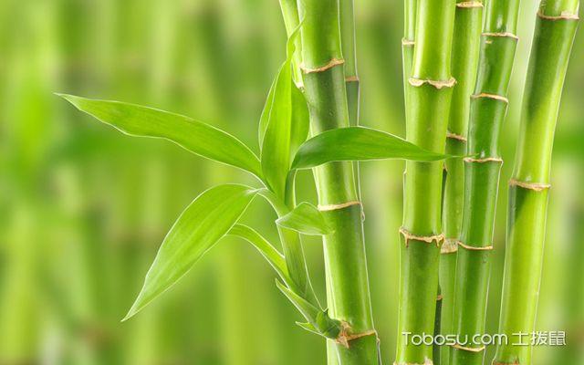 水培富贵竹养几根