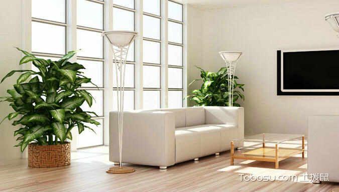 客厅植物摆放风水效果图_土拨鼠装修经验