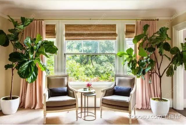 客厅植物摆放风水图片欣赏_土拨鼠装修经验