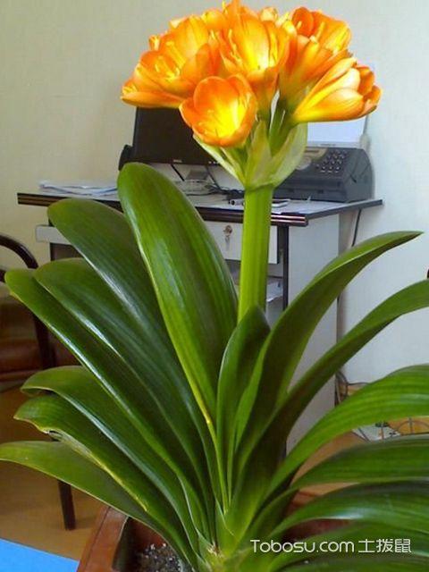 家里适合养什么花
