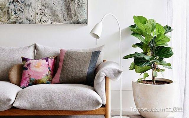 客厅最适合摆放什么植物—琴叶榕