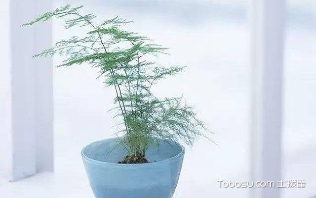家里养什么植物风水好君子兰