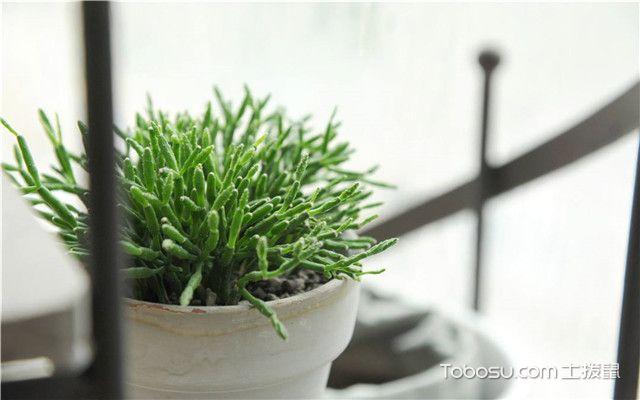 办公室放什么植物好