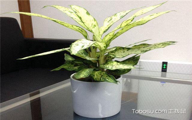 办公室选购植物的技巧有哪些