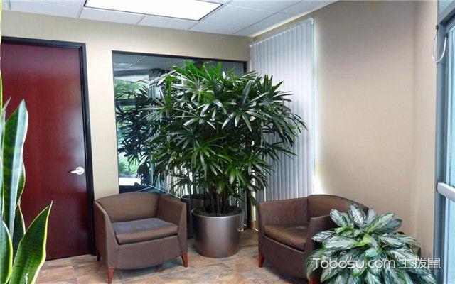 办公室植物选购