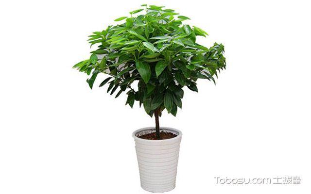 客厅植物摆放风水—植物1