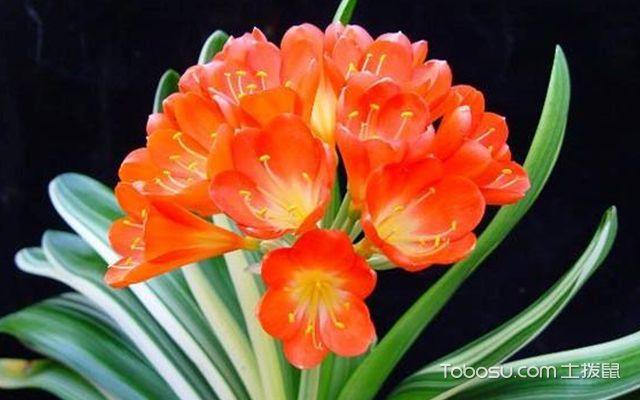 卧室植物风水禁忌—植物1