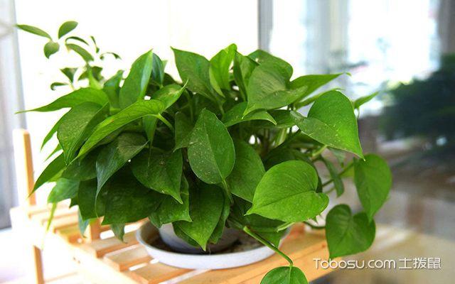 卧室植物风水禁忌—植物2