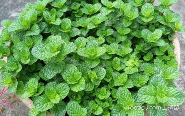卧室植物风水禁忌—植物4