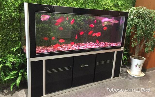 办公室养鱼风水讲究3