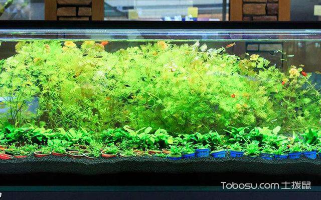 办公室养鱼风水讲究4