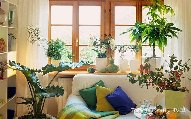 家居植物的布置风水