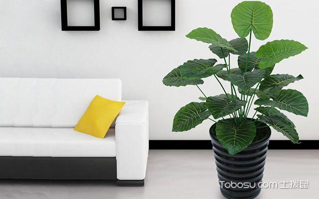 家居植物的布置风水知识