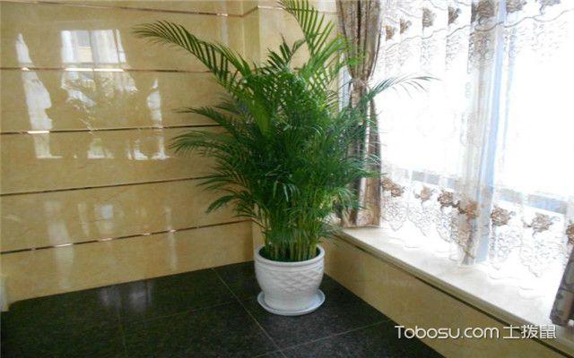 散尾葵和袖珍椰子的区别