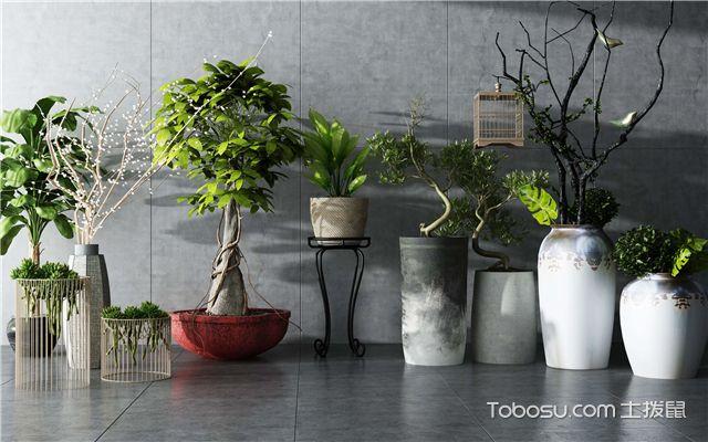 花藝與綠植布置技巧之植物種類