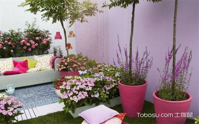 阳台适合种什么植物
