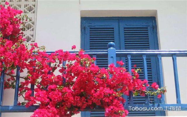 阳台适合种什么植物之观花植物