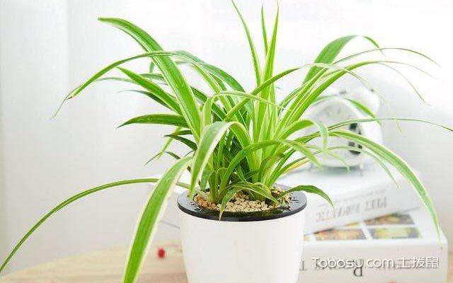 吸甲醛的室内植物都有哪些