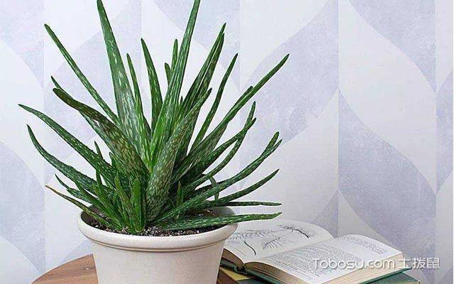 可以吸甲醛的室内植物有哪些