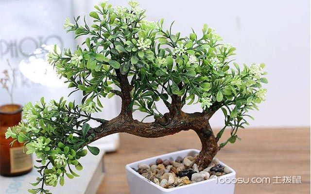 能吸甲醛的室内植物