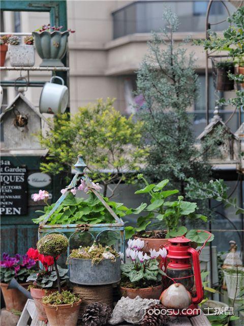 如何把阳台变成花园-植物的栽种