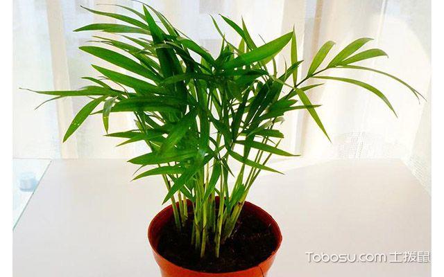 袖珍椰子怎么繁殖