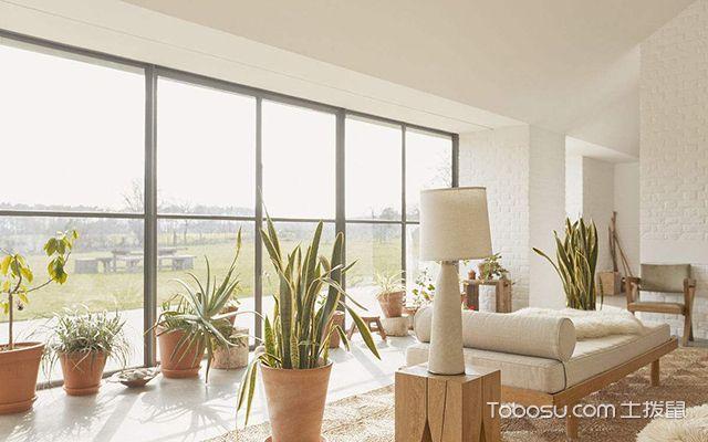 客厅摆放植物禁忌有哪些之多摆放旺财植物