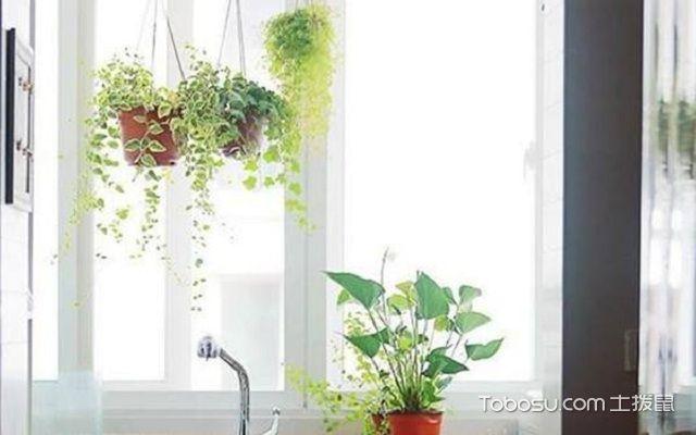 什么植物适合放在厨房之吊兰