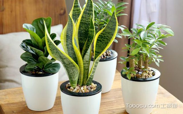 客厅植物怎么摆放好—案例1