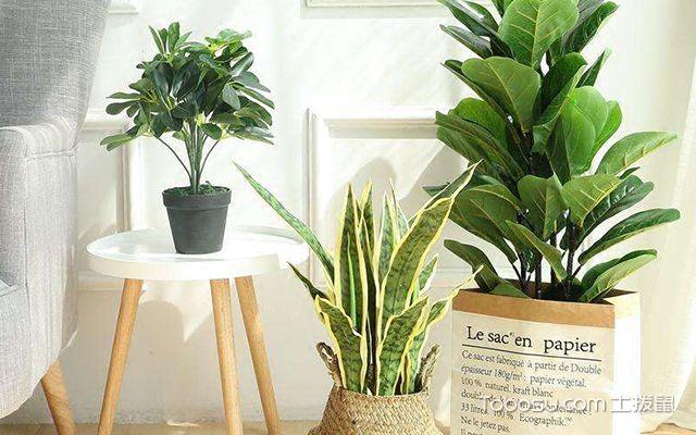 客厅植物怎么摆放好—案例4